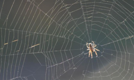 Trik kako da jednostavno otjerate pauke iz kuće