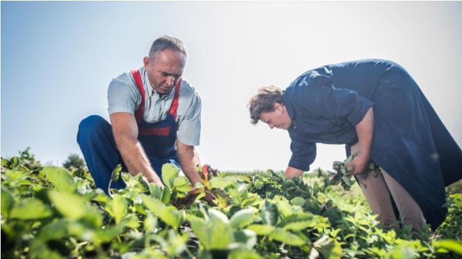 12.5 milijuna KM bespovratnih sredstava za 16 investicija u primarnu poljoprivrednu proizvodnju