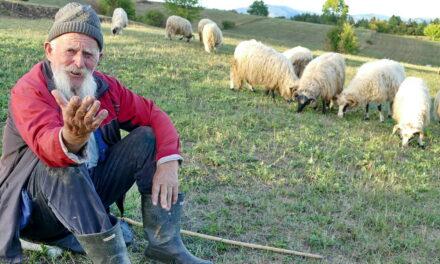 VIDEO: Najstariji pastir u Bosni i Hercegovini je Nedo Milutinović iz Bugojna